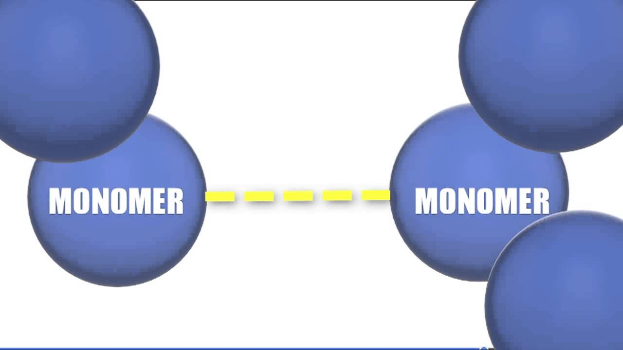 Chromatid Definition Biology