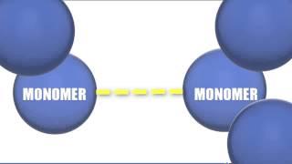 Monomers vs Polymers - Biology Tutorial