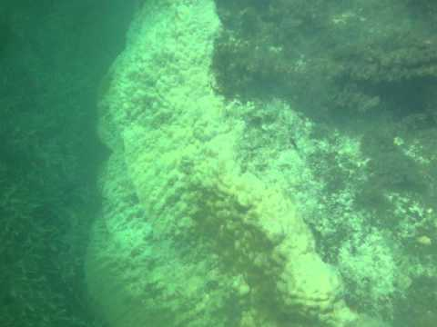 coral garden, mombasa, kenia, diving, scuba, snorkeling, tauchen, underwater, unterwasser, kenya