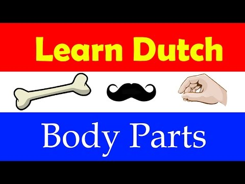 Learn Dutch for beginners : body parts in Dutch language