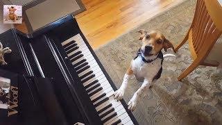 「おもしろ動物」滑り台が大好きな犬、猫,動物たちの動画を一つにまとめ...