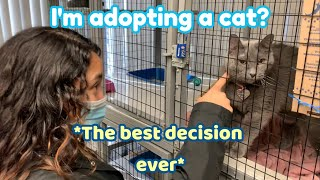 I ADOPTED A CAT (because i'm lonely)
