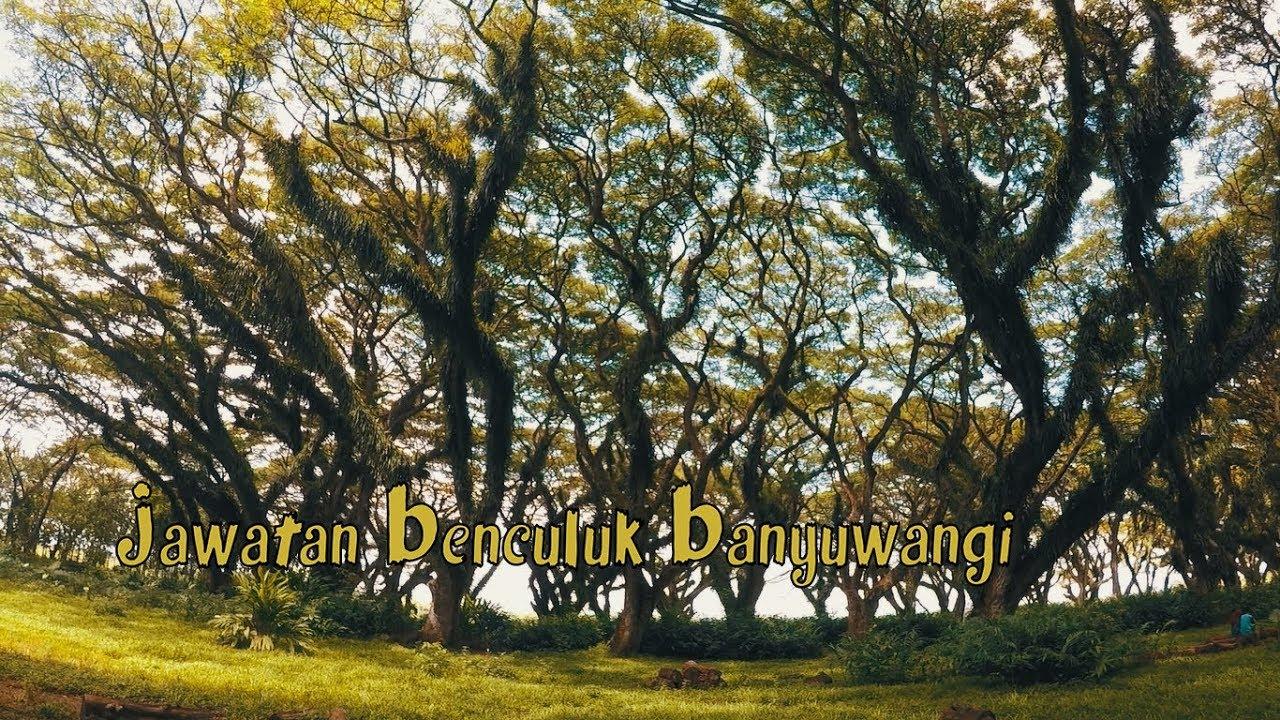 Kracker Pohon Unik Wisata Perhutani Jawatan Benculuk