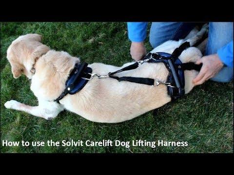 use the PetSafe Solvit CareLift Dog Lifting Harness - YouTube