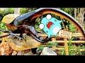 巨大昆虫と恐竜?!ナゴパイナップルパークで恐竜とパイナップルについて学ぼう!サメニンおでかけアニメ!