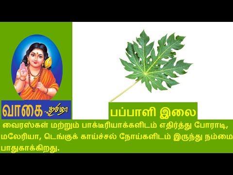 பப்பாளி இலை :- Dengue fever treatment in tamil