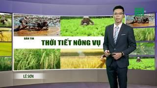 VTC14   Thời tiết nông vụ 22/02/2018   Mời bà con trồng cafe ở Tây Nguyên tham khảo