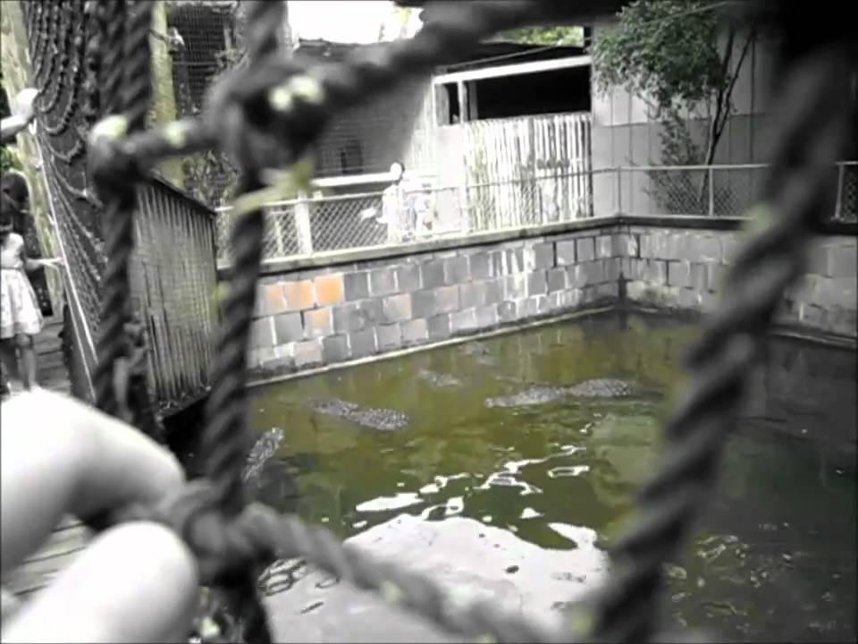 Alligators Everglades Wonder Gardens In Bonita Springs Fl