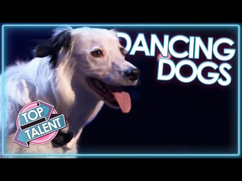 DANCING DOG Auditions From Britain's Got Talent, Swedens Got Talent And MORE! | Top Talent