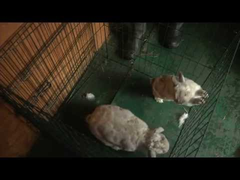 Fairly Beloved Rabbit Care - About Us 2014