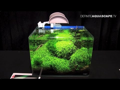 The Art of the Planted Aquarium 2015 - Scaper's Tank (Nano) category, part 7