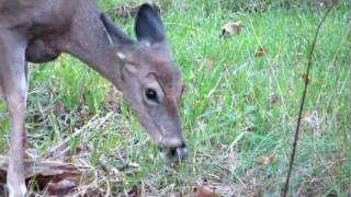 canon sx40 hs deers playing full hd