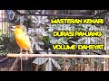 Masteran Kenari Durasi Panjang Volume Dahsyat  Mp3 - Mp4 Download