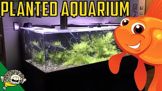 230 gallon planted aquarium the wife s tank update