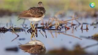 Весенняя жизнь редких птиц