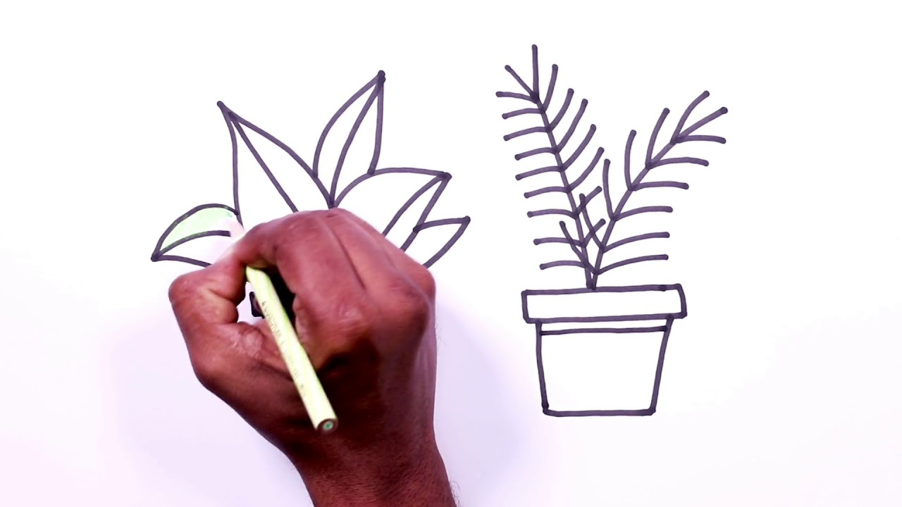 Plant Drawing - How to Draw Plants – Step-by-Step – Part 4