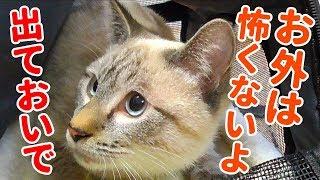 ビビって物陰に隠れてしまった子猫を助けようとしたら、まさかの方法でおびき出すことに成功した thumbnail