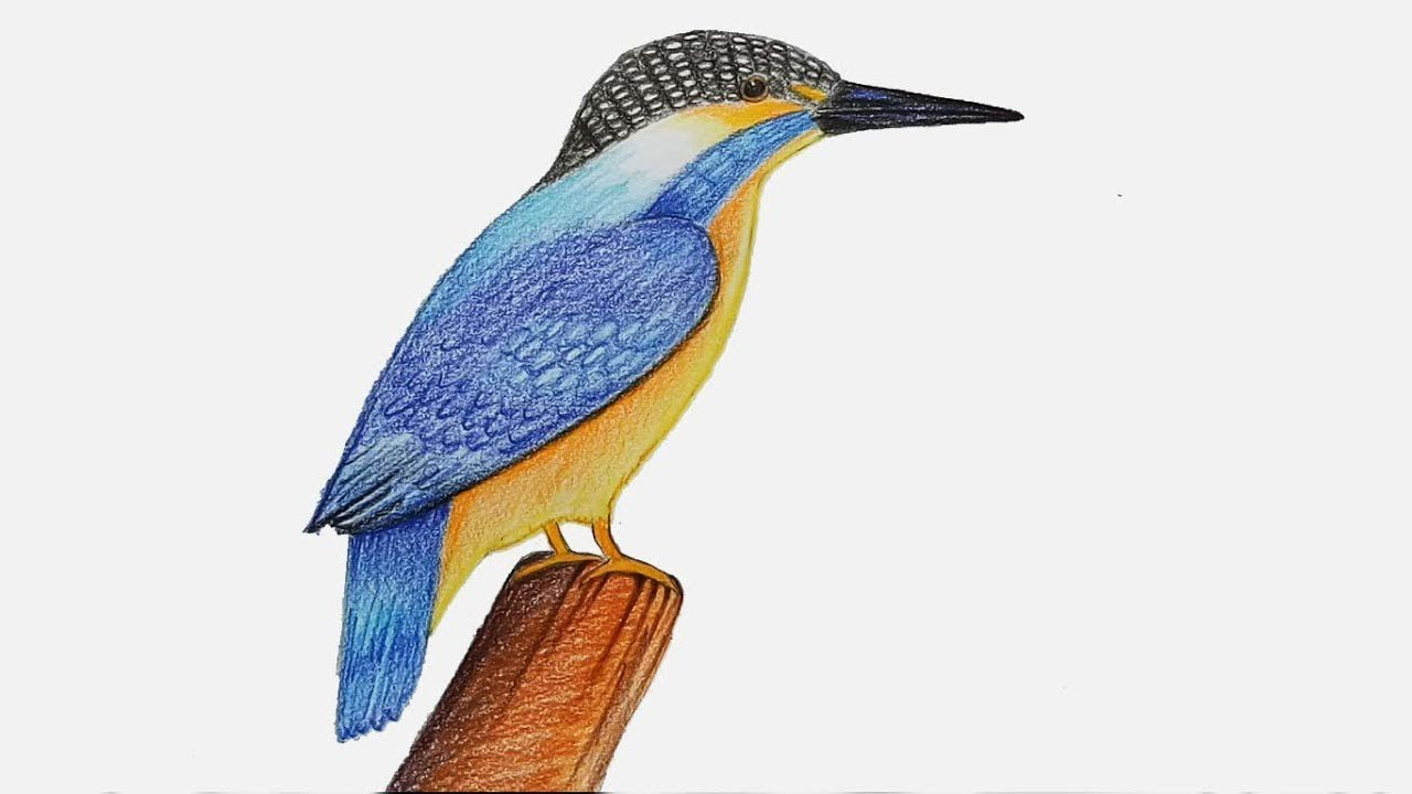 How To Draw Kingfisher Step By Step Very Easy Youtube