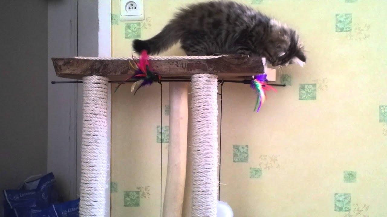 elessar sur son arbre chat fait maison youtube. Black Bedroom Furniture Sets. Home Design Ideas