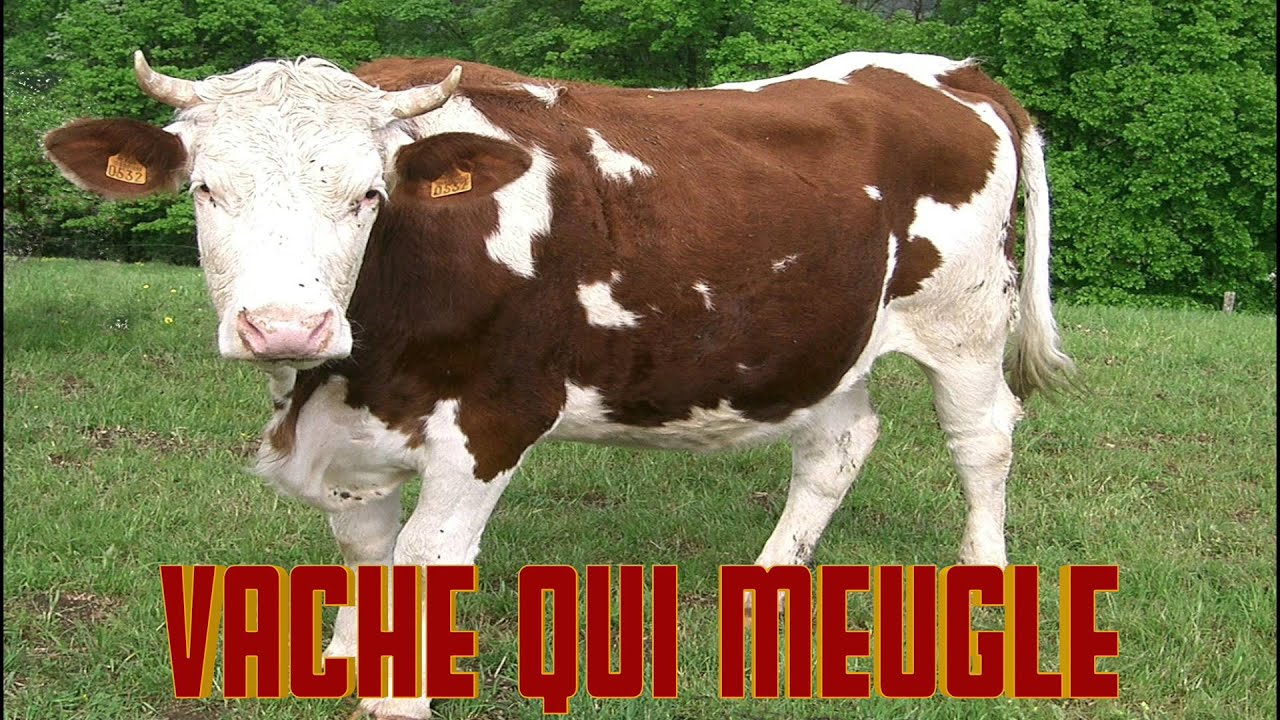 vache qui meugle le cri de la vache le bruit des animaux son de la vache cow noise meuh youtube. Black Bedroom Furniture Sets. Home Design Ideas