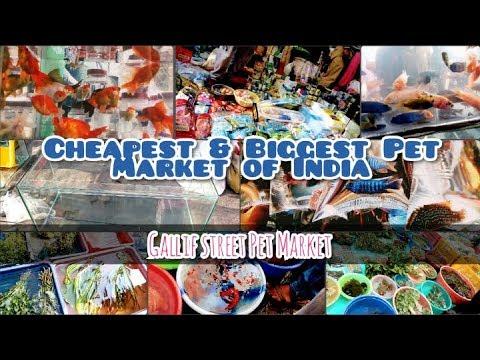 An overview of Galiff Street Fish Market (Hindi)