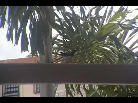 BUZZER GREEN ( Zumbador verde)