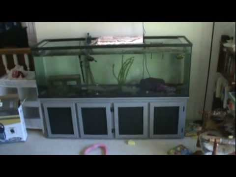 Red Eared Slider Turtle Tank Set up and Care YouTube