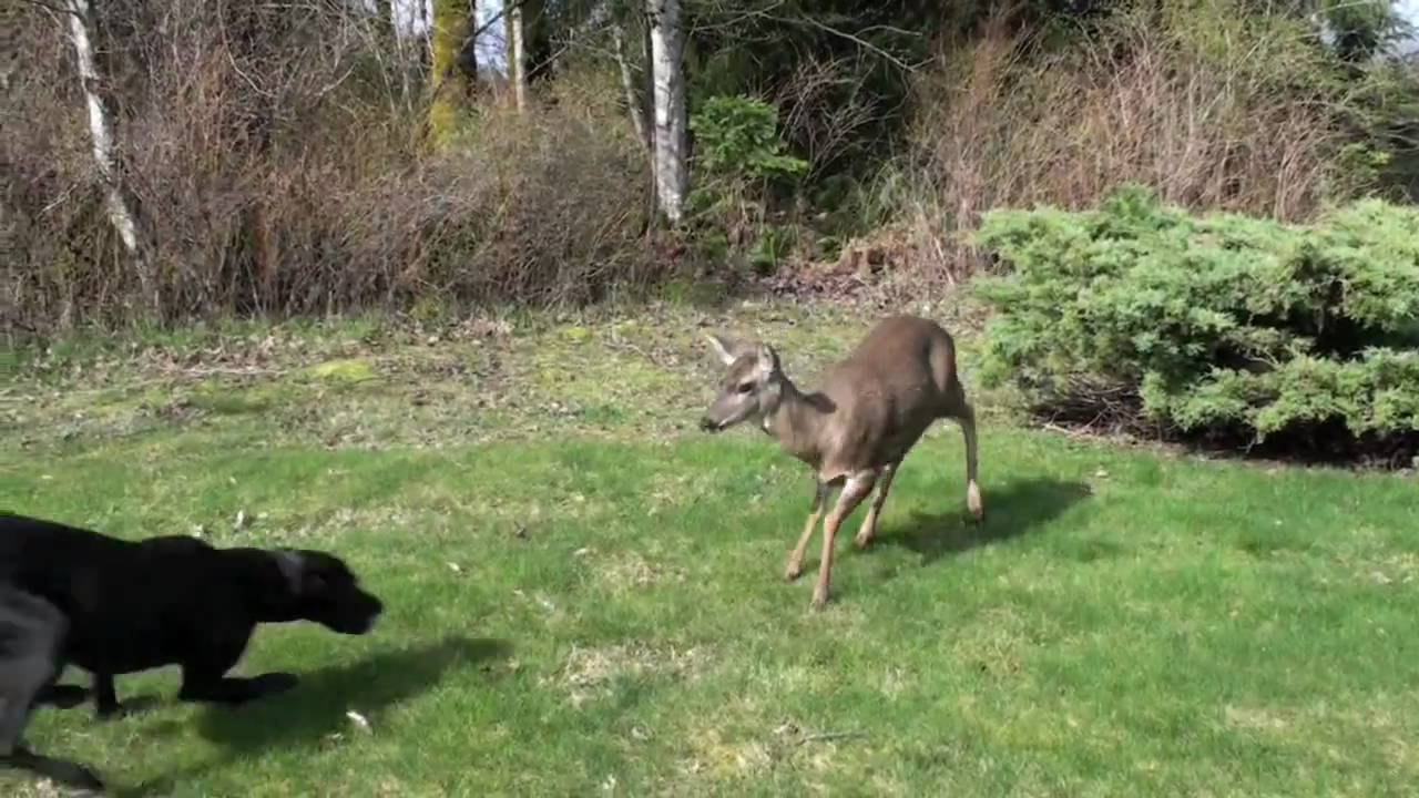 Deer And Dog Friends Forever