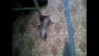 видео Городская клиническая больница №13. Выпуск от 22.10.2016