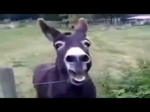 Funny Screaming Animals