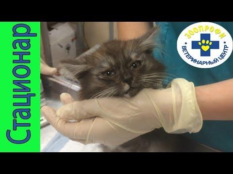 Бездомный Котенок Заселяется в Ветеринарный Стационар