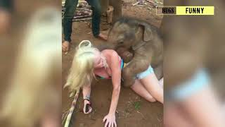 Very Funny World of Animals - Funny Animal Compilation