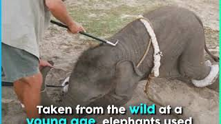 Elephant Ride: A Cruel Tourist Attraction