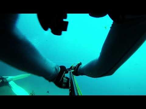 7/26/17 Dive 1 off of Jupiter, FL