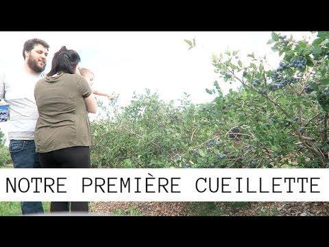 06/08/2017:-première-cueillette-de-bleuets-!