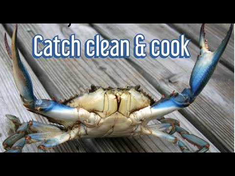 How to Catch, Cook & Clean Blue Claw Crabs