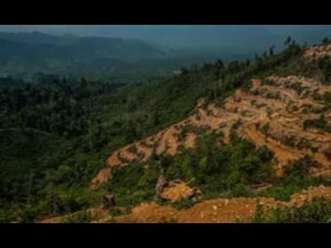 Pepsico  Unilever And Nestl  Accused Of Complicity In Illegal Rainforest Destruction