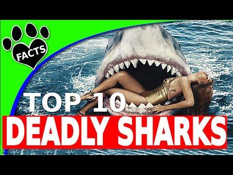 Top 10 Deadliest Sharks Shark Week 2017 Most Deadly Sharks - Animal Facts
