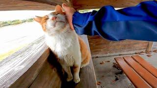 野鳥観察小屋にいたら野良猫がモフられに歩いてきた