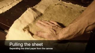 Making Paper From Plants