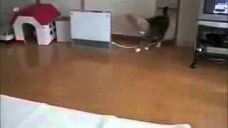 Nette verrückte Katzen   FUN