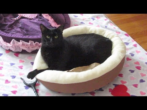 Boo Year 2 # 125 - Boo Loves A Round Cat Bed, Cats By The Windows, Is Hydrox A Girl?