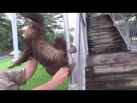 sloth metal