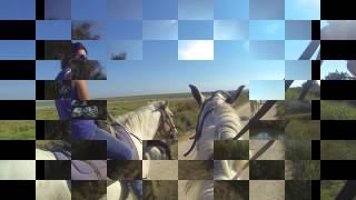 cheval camargue 2015