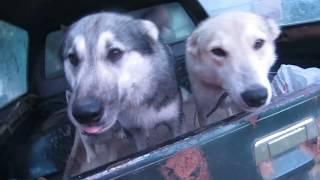 Вернулись собаки  домой с речки!!!