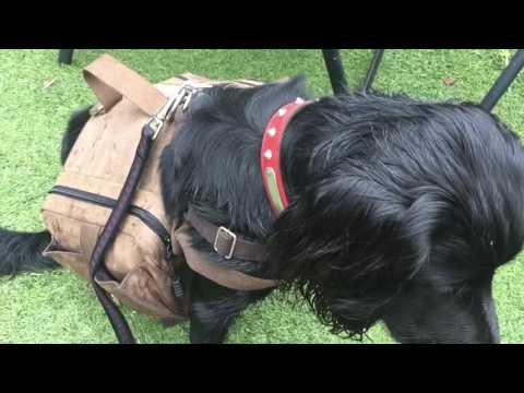 Cesar Millan Introducing  Dogs Sleeping