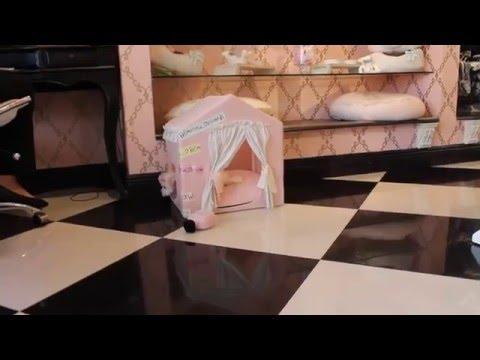Teacup Maltese 2016 Teacup Puppies Store - teacuppuppiesstore - http://www.TeacupPuppiesStore.com