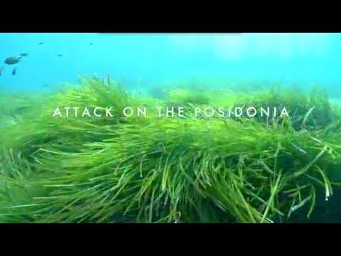 Attack on the Posidonia. Ibiza 2010