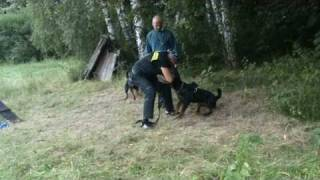 Workout Of Rottweilers - Accra, Aneta Naughty Rotty