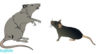 How to Draw Rat for Kids | Learn to Draw | Rat Line Drawing and Drawing Ideas